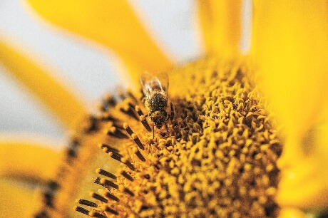 Positive action for pollinators and biodiversity